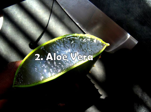 aloe vera for treating itchy acne on face