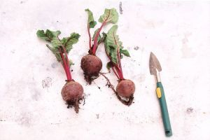 beet root for digestion