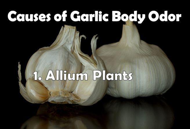 causes of garlic body odor