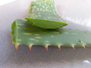 aloe vera face pack for acne