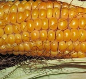 cornmeal for boils on inner thighs