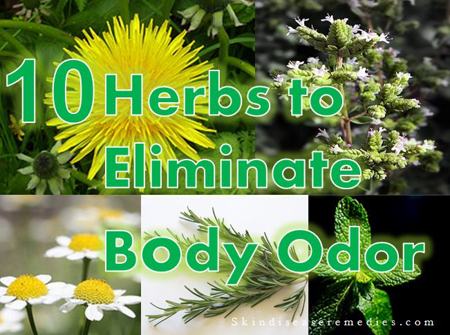 10 Herbal Remedies for Body Odor - Skin Disease Remedies